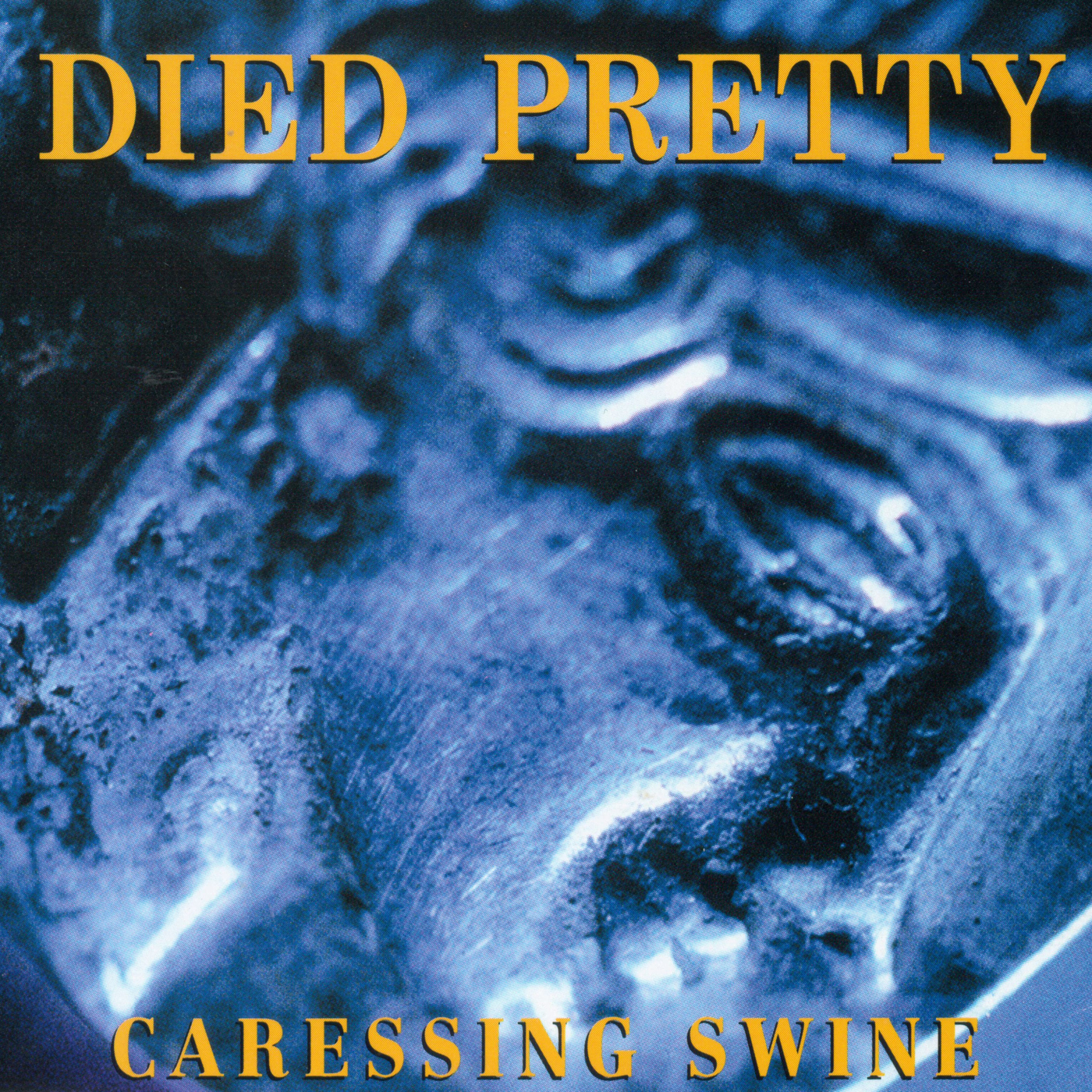 Caressing Swine - Died Pretty