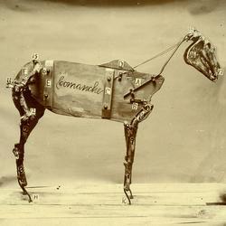 The Horse Comanche - Chadwick Stokes