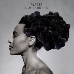 Black Orchid - Malia