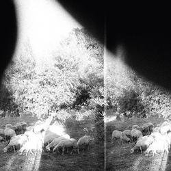 Asunder, Sweet And Other Distress - Godspeed You! Black Emperor