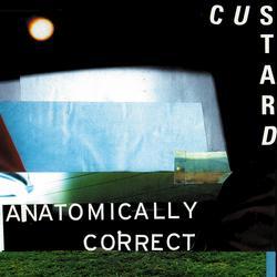 Anatomically Correct - Custard
