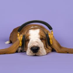 Dog Music - Calming Music for Dogs - Sleepy Dogs